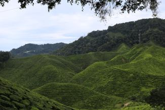 Malaysia, Cameron Highlands, Strawberyy farm, strawberry picking, strawberry restaurant