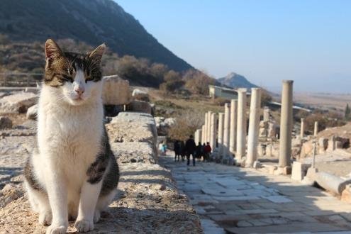 Turkey, cats, kedi, van cat,